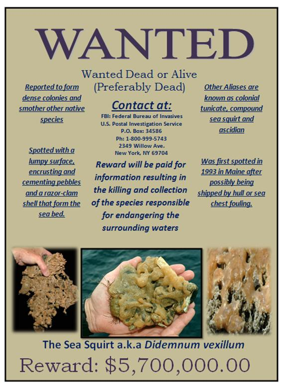 Blog Archives Seventh Grade Science – Wanted Poster Examples